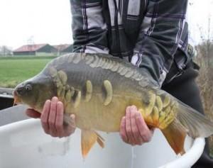 vis uitzetten.4